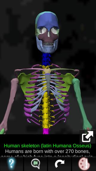 Bones 3D Anatomy