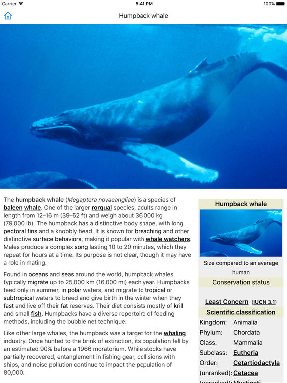 scientific classification of whales After humans, killer whales are the most socially and ecologically complex species on the planet scientific classification scientific name.