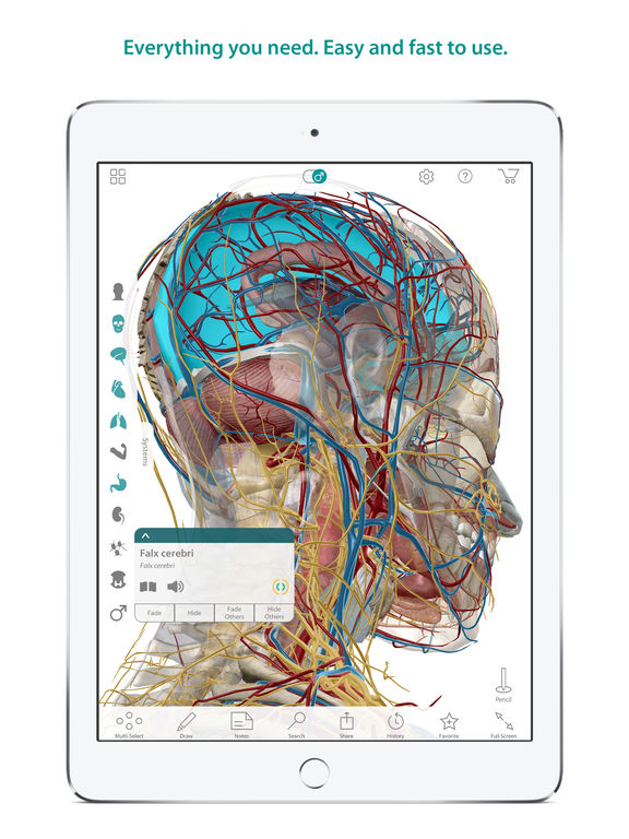 3d human anatomy atlas