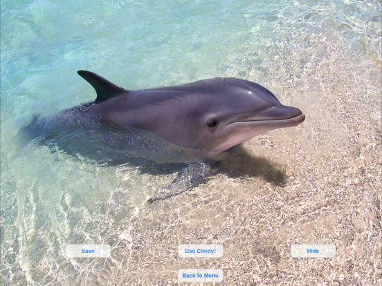 Lovely Dolphins Slideshow & Wallpapers iPad Screenshot 2