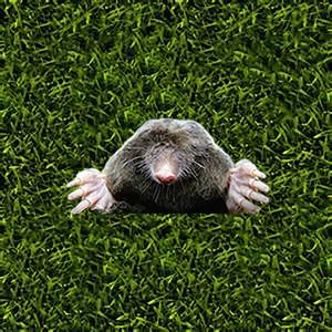 WATCH A MOLE : WAM is Whack A Mole for Apple Watch