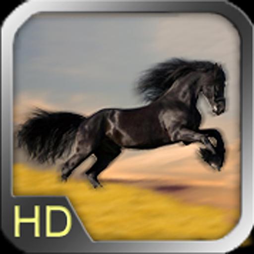 Art of Blur HD