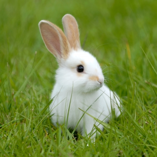 SlidePuzzle - Bunny