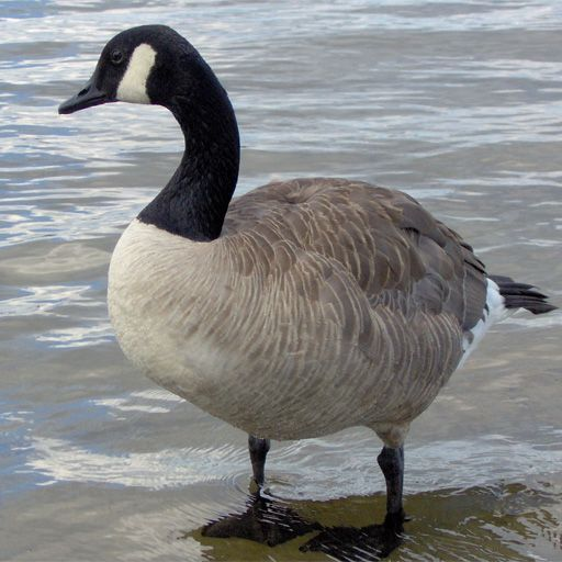 SlidePuzzle - Goose