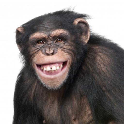 Happy Chimpanzee Snow Globe