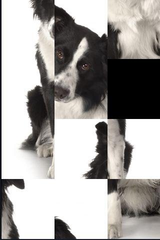 SlidePuzzle - Border Collie screenshot #1