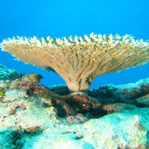 Coral Reefs Study Guide