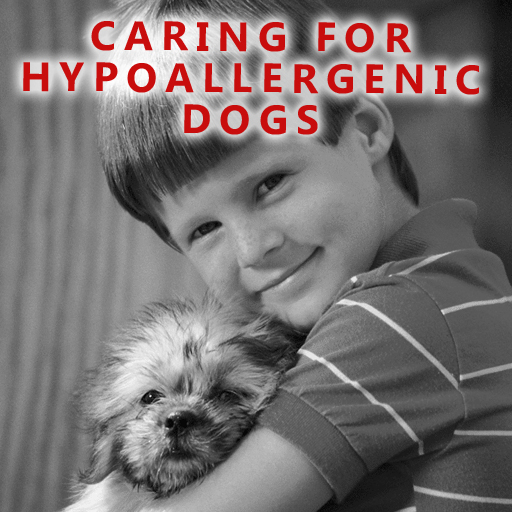 Caring For Hypoallergenic Dogs