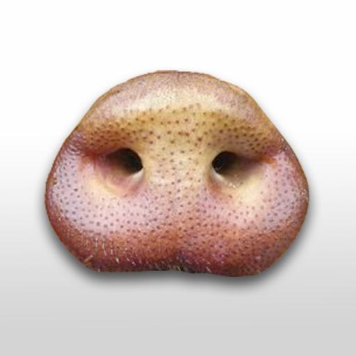 Swine Flu Tester