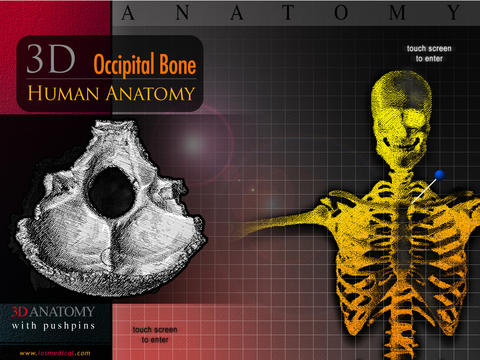 Occipital Bone 3D screenshot 4