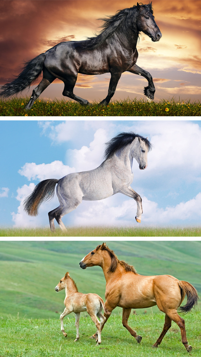Horse Wallpapers Hd Collection Of Running Horses Apps 148apps