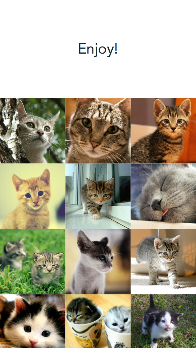 Cute Today: Cat Edition - One cute photo a day screenshot 4