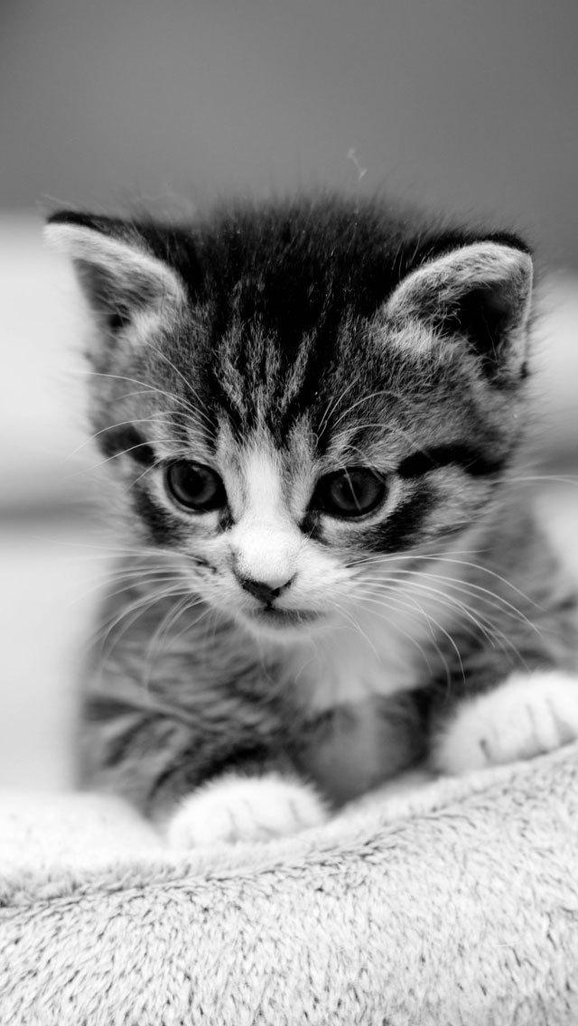 Cat Wallpapers Retina Display Hd Backgrounds Iphone Reviews At