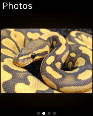 World of Snakes screenshot 15
