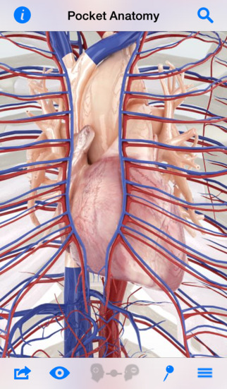 Pocket Anatomy - Interactive 3D Human Anatomy and Physiology