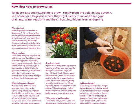 Kew Magazine screenshot 7