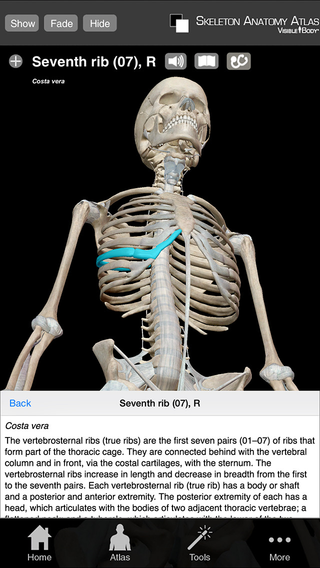 Skeleton Anatomy Atlas: Essential Reference for Students and Healthcare Professionals screenshot 3