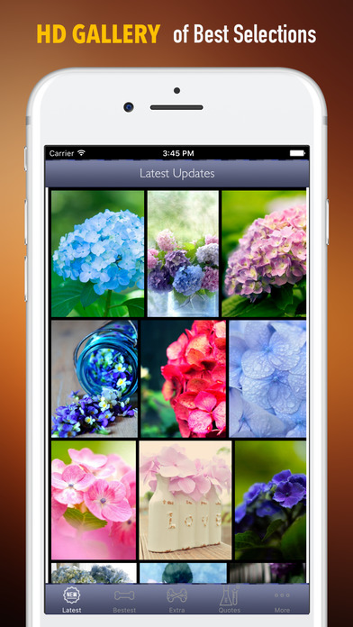 Hydrangea Wallpapers HD- Quotes and Art Pictures screenshot 1