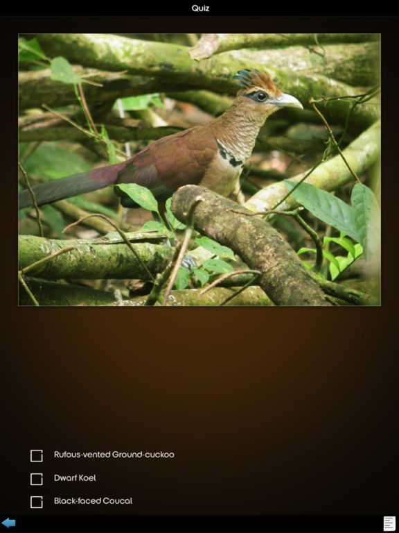 Cuckoos Collection screenshot 6