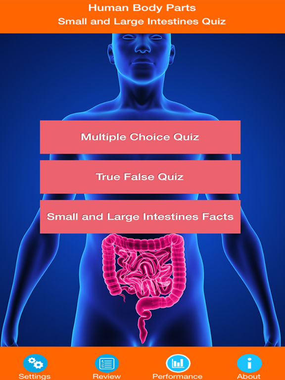 Body Parts : Small and Large Intestines Quiz screenshot 6