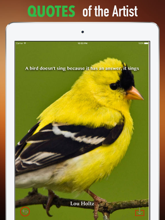 Goldfinch Wallpapers HD- Quotes and Art screenshot 9