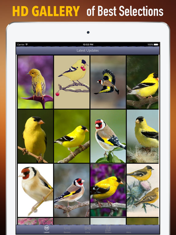 Goldfinch Wallpapers HD- Quotes and Art screenshot 6