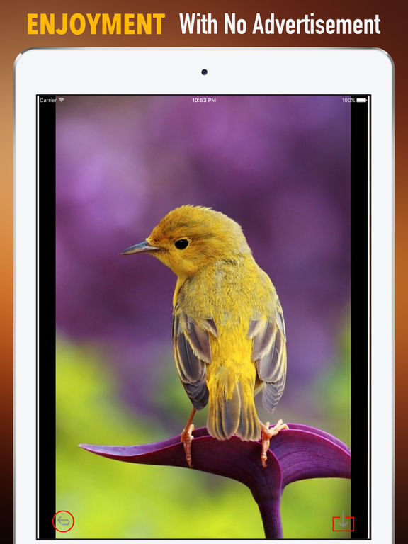 Goldfinch Wallpapers HD- Quotes and Art screenshot 7