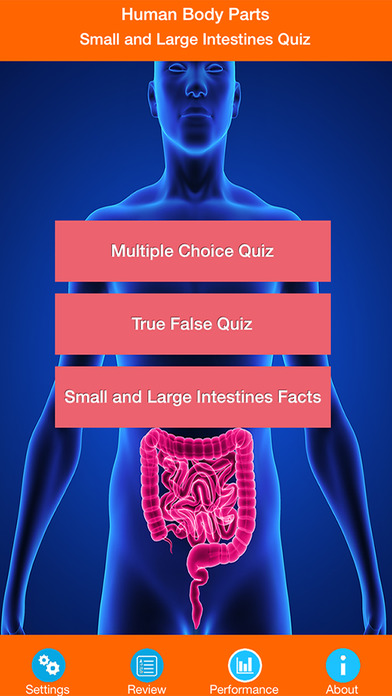 Body Parts : Small and Large Intestines Quiz screenshot 1
