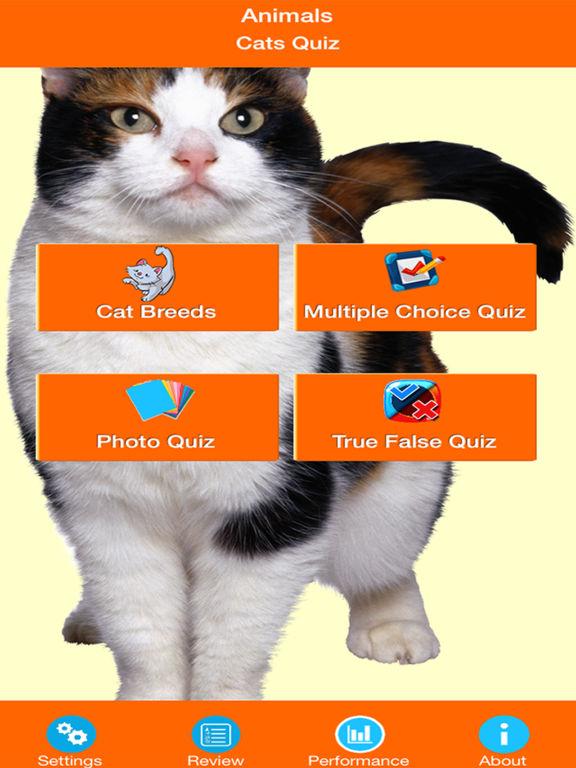 Cat Breeds Quiz screenshot 6