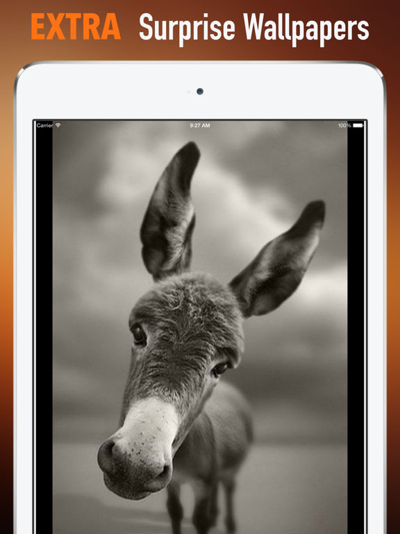 Donkeys Wallpapers HD: Quotes Backgrounds screenshot 8