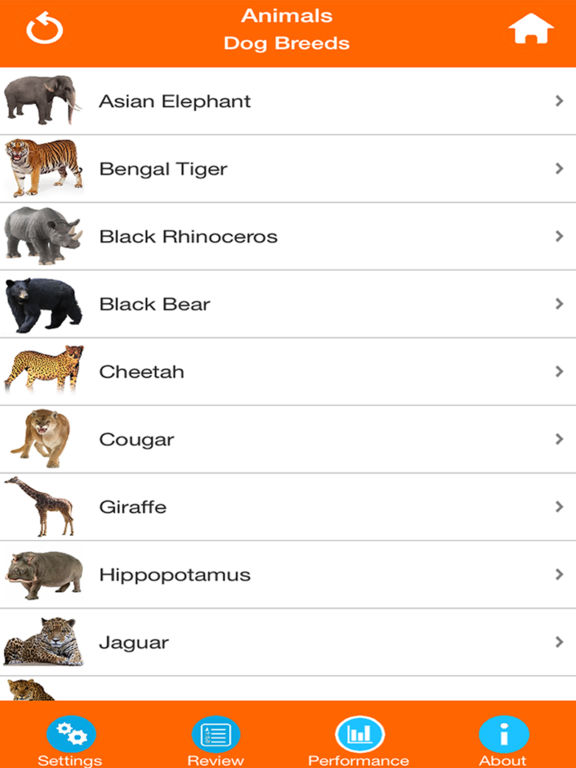 Animals : Wild Mammals Quiz screenshot 7