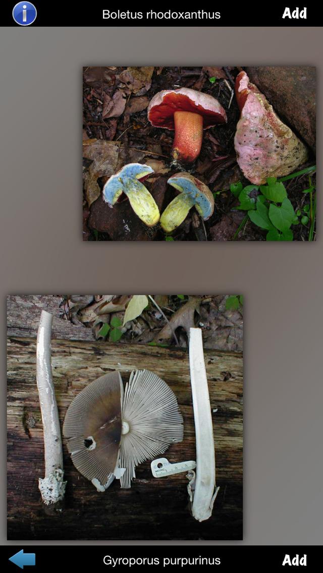 Mushrooms Info screenshot 5
