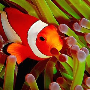 Fish Expert Pro