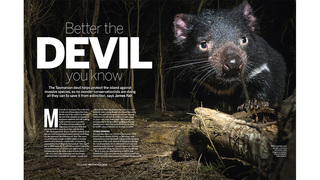 Best of BBC Wildlife Magazine screenshot 4