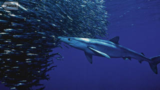 1000 Fische aus aller Welt screenshot 5