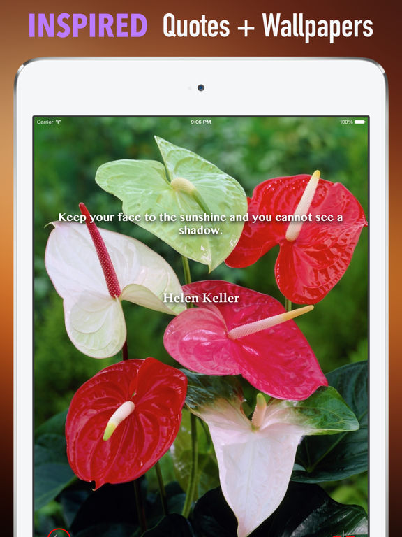 Anthurium Wallpapers HD: Quotes Backgrounds with Art Pictures screenshot 10