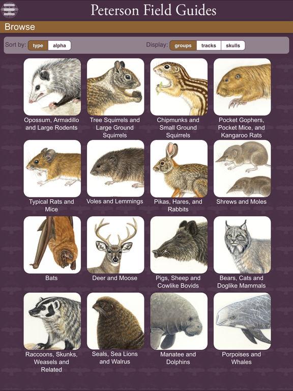 Peterson Mammals Field Guide screenshot 8