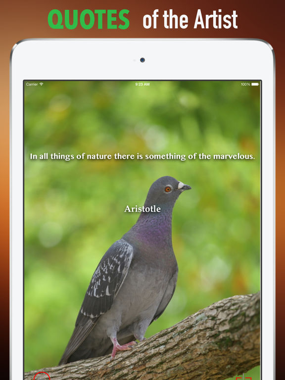 Pigeon Wallpapers HD: Quotes Backgrounds screenshot 9