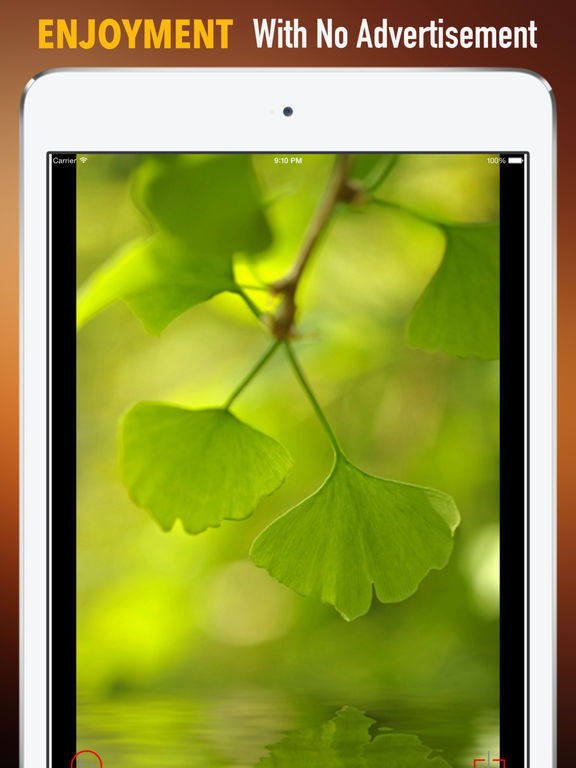 Ginkgo Wallpapers HD: Quotes Backgrounds with Art Pictures screenshot 7