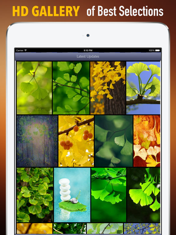 Ginkgo Wallpapers HD: Quotes Backgrounds with Art Pictures screenshot 6