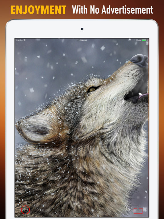 Wolf Howling Wallpapers HD: Quotes,Art Pictures screenshot 7