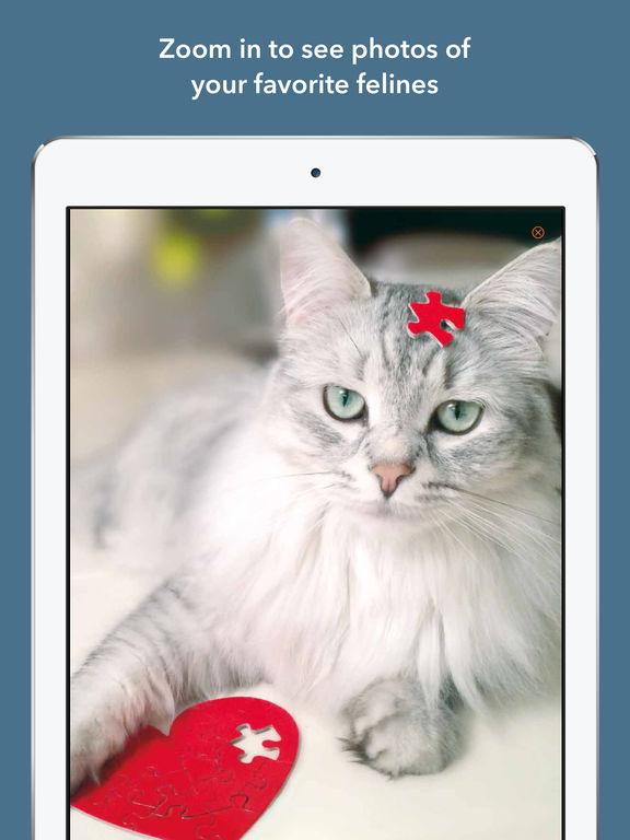 365 Cats Page-A-Day Calendar 2017 screenshot 9