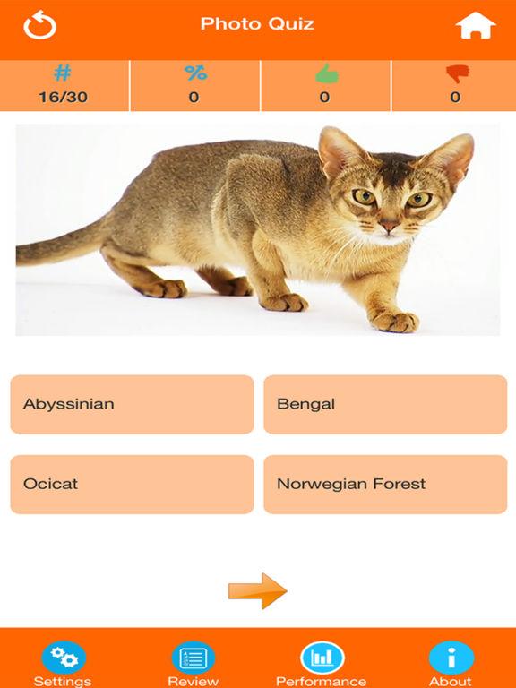 Cat Breeds Quiz screenshot 7