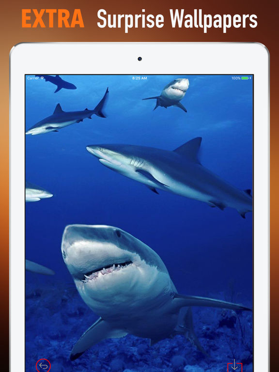 Marine Life Wallpapers HD- Quotes and Art Picture screenshot 8